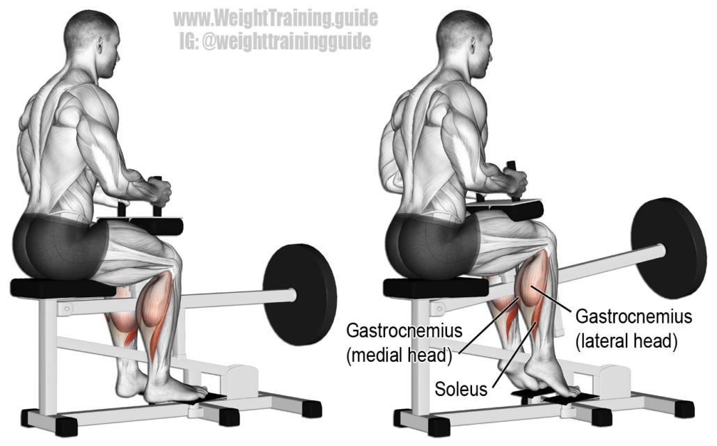 runner strengthening calf muscles